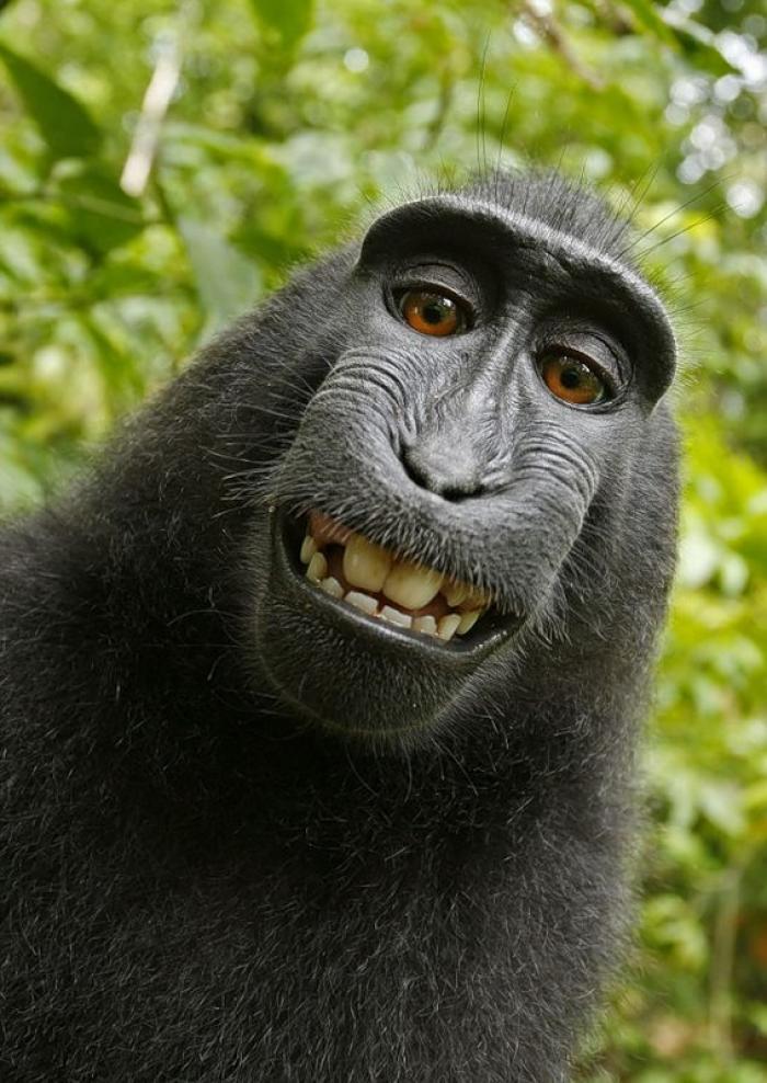 секс фото обезьяны
